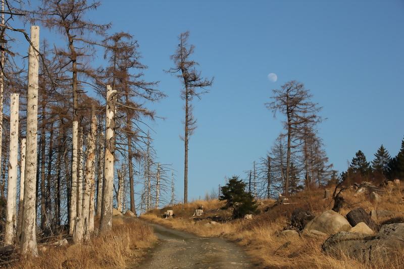 somewhere Harz