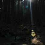 Landsmann / Eastern Harz